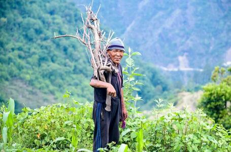 नेपालका वनमा कार्बन भण्डारणको नयाँ बाटो